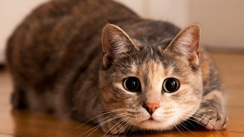 Фото глистов у кошек