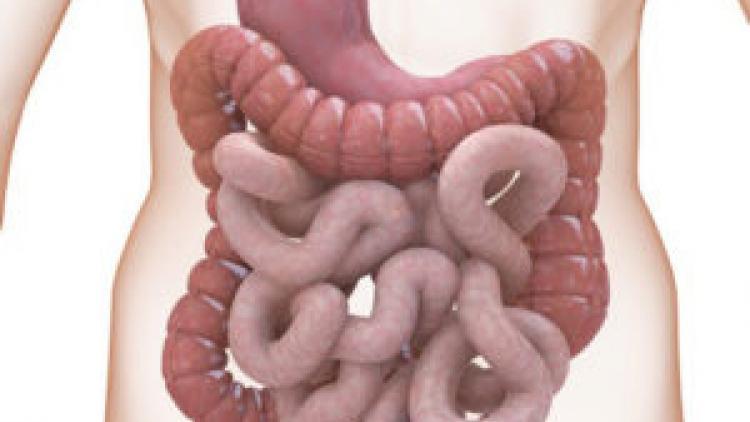 Средства для очищения организма от паразитов