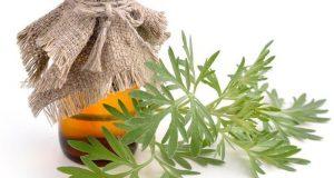 Настойка полыни от паразитов - рецепты и применение