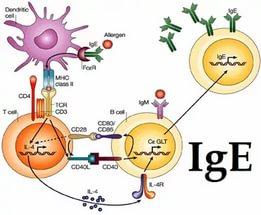 Анализ крови на антитела