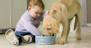 Симптомы глистов у ребенка. Признаки глистов у детей