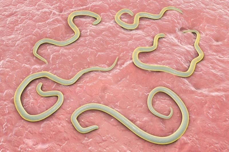 Универсальное средство от паразитов в организме человека