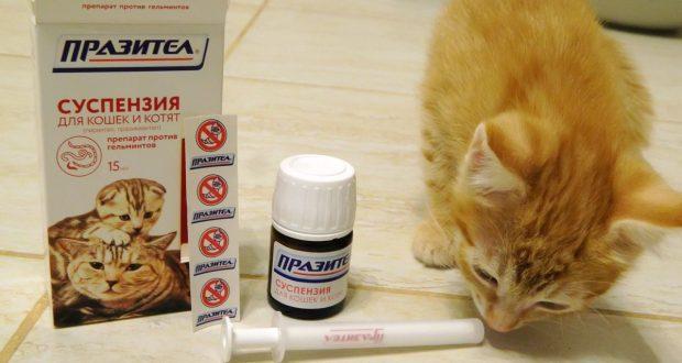 Как дать таблетку котенку от глистов - средства и методы