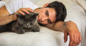 Лечение кошек от глистов - признаки и виды паразитов