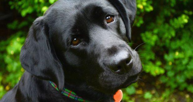Таблетки от глистов для собак - как правильно дать лекарство