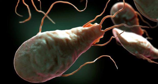 Жгутиковые: паразиты человека, общее описание и строение