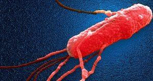Анализ на сальмонеллез: методы и лабораторная диагностика