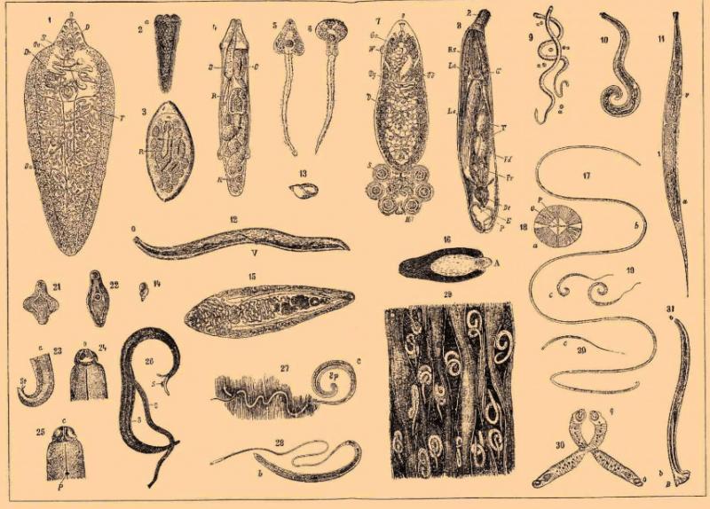 Как почистить организм от паразитов народными средствами