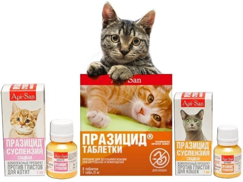 Лекарства от глистов для кошек