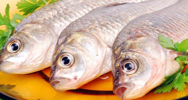 Солитер в рыбе: как выглядит, чем опасен, фото и описание