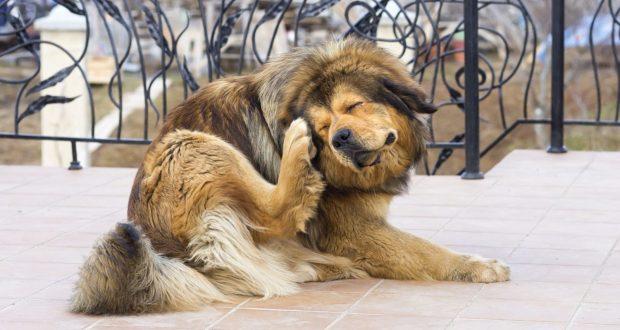 Блохи у собак: причины и признаки появления, методы лечения