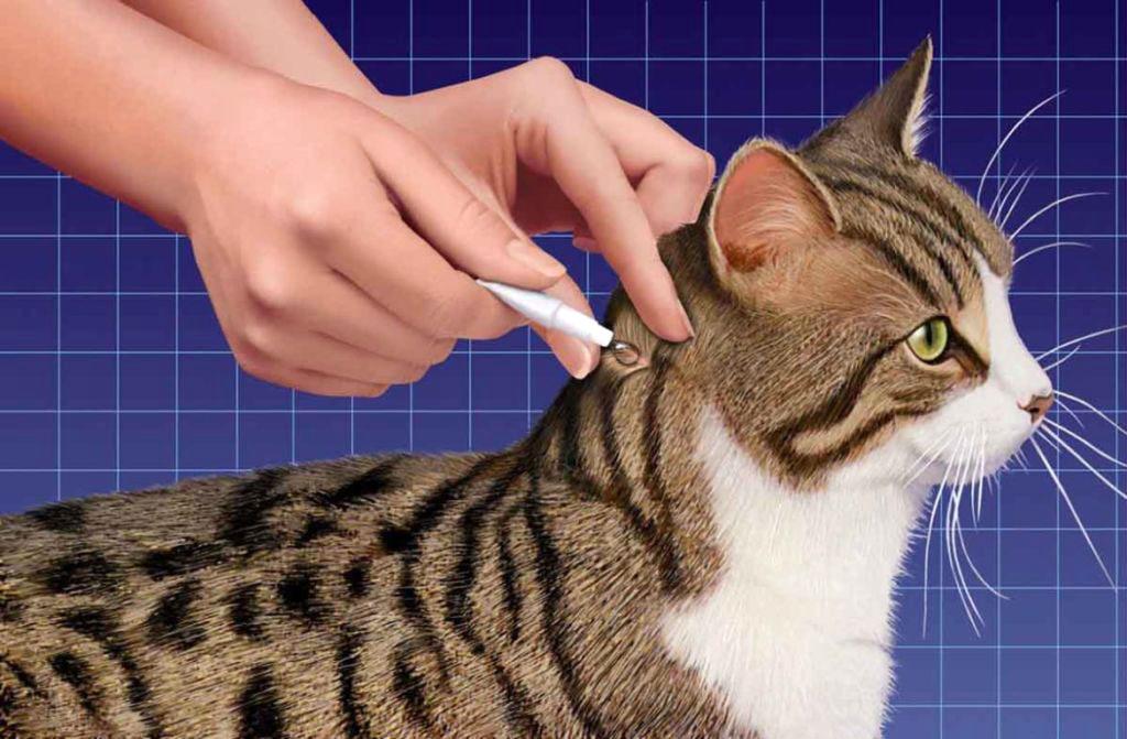 Повышенное давление у кошки симптомы