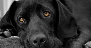 Глисты у собак: признаки, симптомы и лечение. Таблетки