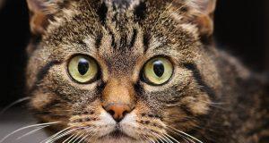 Глисты у кота: симптомы, диагноз, медикаментозное лечение