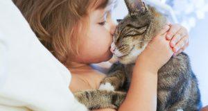 Заразиться глистами от кошки - возможно ли это?